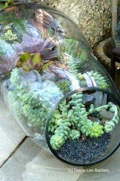 Terrarium planters for my non-hardy succulents. Great idea.