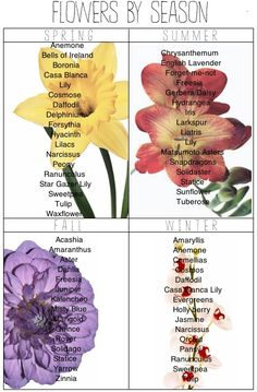 Flower Guide- know how to plant seasonal flowers so that your garden is always full. Having a rotating menu of flowers (splashes of color) is not just pretty, it increases marketability because Beautiful gardens are a plus. Dead gardens are not.