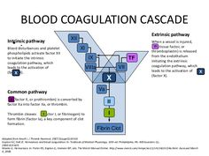Blood Coagulation Cascade Nursing Care, Nursing Tips, Nursing Notes, Lab Tech, Coagulation Cascade, Medical Laboratory Scientist, Clinical Chemistry, Pharmacology Nursing, Phlebotomy