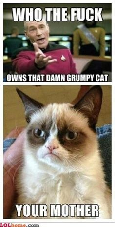 grumpy cat and sheldon - Google Search
