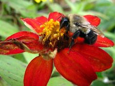 Qué hacer si eres alérgico a abejas o avispas