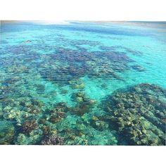 【narunosuke87】さんのInstagramをピンしています。 《💚🏝🌺🌟 #オーストラリア#Australia#ケアンズ#Cairns#オージー#AUS#Aussie#女子旅#南国#旅行#海外旅行#オーストラリア旅行#美しい#リゾート#resort#travel#love#happy#enjoy#世界遺産#グレートバリアリーフ#greatbarrierreef#海#sea#現実逃避#グリーン島#greenisland#beautiful#綺麗な海#透明感》
