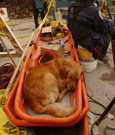 During 9/11 one grabbed shut eye where ever they might find it.  Exhausted Search & Rescue team.