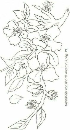 Hydrangea Line Drawing photo Flower line drawings