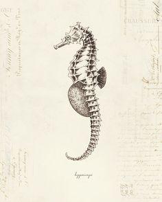 Vintage Seahorse Hippocampe on French Ephemera Print by OrangeTail