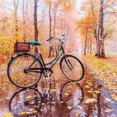 a colorful pose Autumn Photography, Art Photography, Bike Poster, Autumn Cozy, Bicycle Art, Autumn Inspiration, The Great Outdoors, Peace And Love, Photo And Video