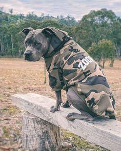 Amstaff Terrier, Bull Terriers, Pit Bulls, Trips, Hoodie, Fur, Camping, Cold, My Favorite Things