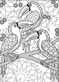 Colorir Coloring Tropical Bird Coloriar