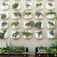 Cheap wall hanging planters, Buy Quality hanging planter directly from China vertical garden Suppliers: 2 pieces Green Grow Bag Wall Hanging Planter Vertical Garden 1 Pocket Vegetable Living Garden Bag Home Supplies Flower Planters, Diy Planters, Hanging Planters, Flower Pots, Planter Pots, Wall Mounted Planters Outdoor, Concrete Planters, Diy Hanging, Plantador Vertical
