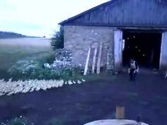 Un granjero ruso que dirige a sus patos ¡como a soldados!