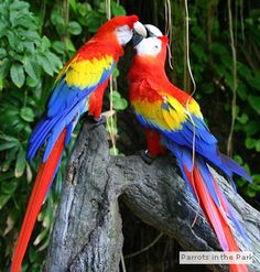 Parrot Mountain .... YES, I WANT TO VISIT THIS PLACE!!!!!!