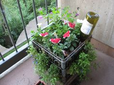 She also had a milk crate container garden. Rachel's favorite flowers are Petunias, Zinnias, Marigolds and Cosmos.