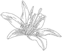 "Day Lily (from Pen & Ink Flowers) Perfect for combining with inks, paint, or colored pencils. Use it with the outline only version for ""shadow appliqué."" #machineembroidery #flower #redwork #floral"