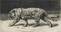 Tiger Sketch, Tiger Drawing, Big Cats Art, Cat Art, Animal Sketches, Animal Drawings, Tiger Artwork, Cat Anatomy, Lion King Art
