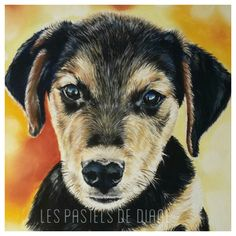 Lyka, chien Labrador/Beauceron, pastels secs