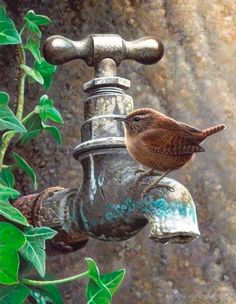 The Dry Tap - small bird looking for water...    this is a wren.