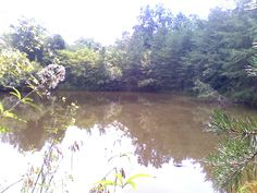Nice Pond on a Perry County, IN Lease Pond, River, Pictures, Outdoor, Photos, Outdoors, Water Pond, Outdoor Games, The Great Outdoors