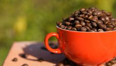 Genuss Kaffee Häferl Sonne Shops, Dog Food Recipes, Mugs, Tableware, Animal Food, Sun, Kaffee, Tents, Dinnerware