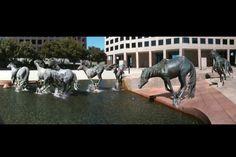 2. Caballos corriendo, en Irving, Texas