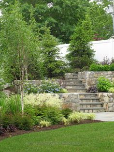 Arced fieldstone walls create terraced planting beds to screen neighbors with evergreen spruce trees. The bark of the white birch trees stands out against the green foliage.  White astilbe flowers at the base of the walls compliment the blue lace cap hydrangeas on the level above. Westport, CT.