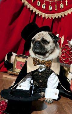 Magician Dog Costume