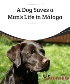 A Dog Saves a Man's Life in Málaga  The actions of dogs in the rescue of human lives are well-known. They have demonstrated their instinct in many dangerous situations. There are stories of people that owe their life to a dog's heroic action. Sometimes the dog even risked his own life when saving the person's.