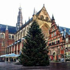 De kerstboom staat weer te shinen op de Grote Markt dit jaar! Kerst in Haarlem kan beginnen. #kerst #haarlem