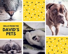 Gold and Navy Blue with Sprinkles Family Pet Photo Collage Photo Collage Template, Photomontage, Graphic Design, Pets, Canvas, Sprinkles, Movie Posters, Navy Blue, Animals