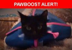 Please spread the word! Isabella was last seen in Austin, TX 78746.    Nearest Address: Allen Road, Austin, TX, United States