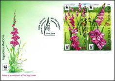 FDC Envelope MOLDOVA, WWF, Flora, Turkish Marsh Gladiolus, 2016