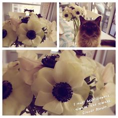 A Monday morning hello to all our followers... wishing everyone a great week ahead :) www.erinmillsflorist.com