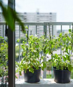 じぶんで編集する、コンパクトな団地くらし。 | MUJI SUPPORT 事例集 | 無印良品 Interior Concept, Muji, Plants, Room, Design, Bedroom, Rooms, Plant, Rum