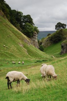 Gorgeous Landscape with Sheep | Content in a Cottage