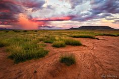 Tafelkop Storm - The Karoo bursts into colour after summer rains and a stormy sunset (Feb-2012) photo credit: Rob Southey Photography