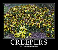 Creepers They're Everywhere!  This is when you realize you've played too much Minecraft.