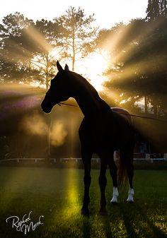 Send by Gods... by Raphael Macek - Horse Photography, via Flickr