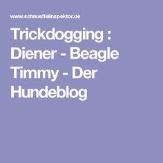 Trickdogging : Diener - Beagle Timmy - Der Hundeblog