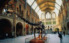 As my theme is Native American I have decided the best type of museum to sell my item would be The Natural History Museum.