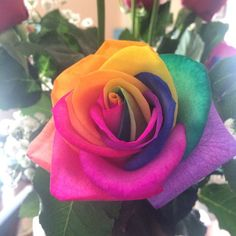 Color ✂️ | Colourful Rose