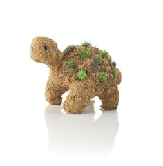 Gifts That Grow: Succulent Turtle --> http://www.hgtvgardens.com/decorating/gifts-that-grow-on-you?s=4&soc=pinterest