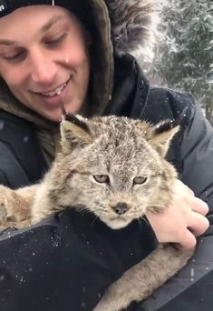 A Purring Lynx You can find Natural baby and more on our website.A Purring Lynx Cute Little Animals, Cute Funny Animals, Little Dogs, Cute Cats, Cute Wild Animals, Cute Animal Videos, Funny Animal Pictures, Beautiful Cats, Animals Beautiful
