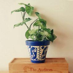 #flowerpot #catflowerpot #plants #cats #art #painting #catart