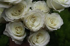 Snowball by Harvest via Holly Chapple Rose Varieties, Snowball, Love Flowers, Harvest, Flora, Wedding Stuff, Wedding Ideas, Roses, Brittany