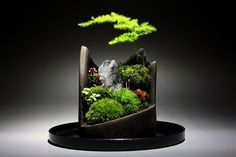 Moss Bonsai Garden with jagged wooden tray/vessel and rock.