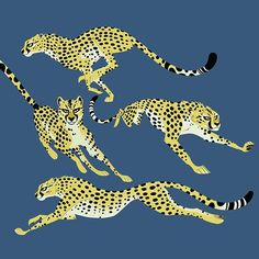 Some Cheetah posing I did for Kratts. #cheetah #bigcats