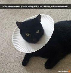gato machucado