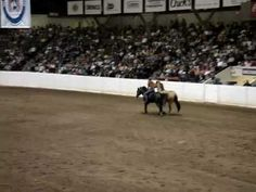 Roxy and Maggie in a freestyle reining with Stacey Westfall! i love Stacey! she seems less aggressive than Clinton Anderson, although i havent been able to find as much from her