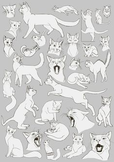 Cat Anatomy Drawing Cats Images Animal Drawings Drawing Ideas on How To Draw Animals Cats and Their Anatomy Over Millions
