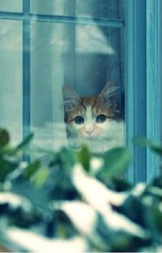 Cats are safer inside, buy a cattio. I Love Cats, Crazy Cats, Cute Cats, Funny Cats, Animals And Pets, Funny Animals, Cute Animals, Image Chat, Neko