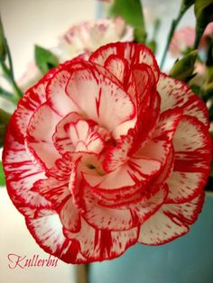 *Kullerbü*: Flower-Friday